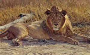 John Banovich: King of Beasts Note Cards