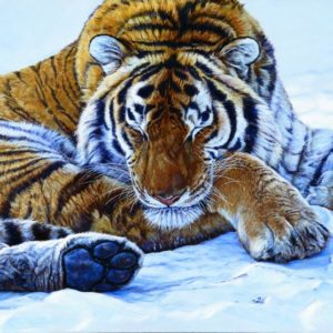 John Banovich: Tigers in the Snow Note Cards