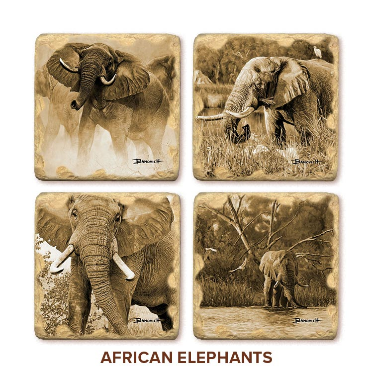 John Banovich: African Elephant Coasters